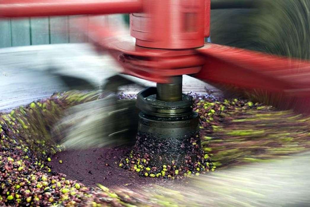 Prerada maslina u maslinovo ulje: proces proizvodnje